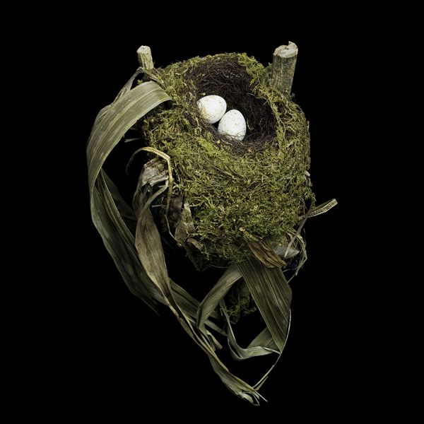 Spotted Nightingale Thrush Nest